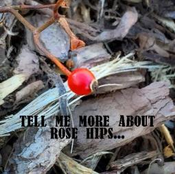More about Rose Hips